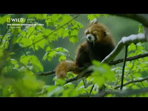 The Hidden Kingdoms of China | Premieres 7 April, 9 PM | Nat Geo Wild