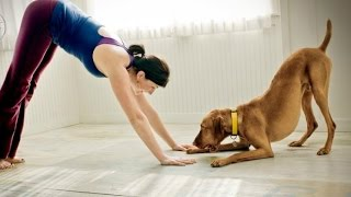 Funny Cats And Dogs Helping Their Owners Exercise [BEST OF]