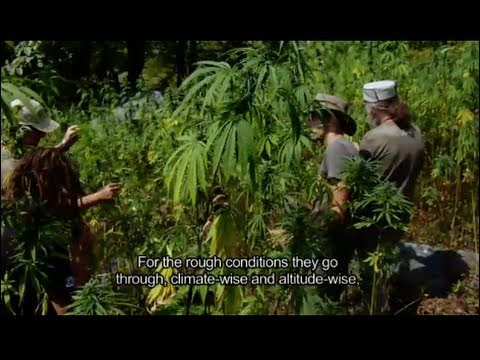 Strain Hunters India Expedition (FULL HD MOVIE)