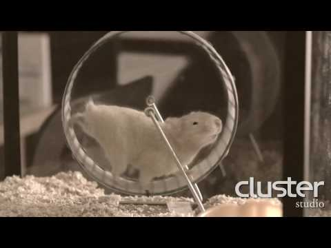 Hamster commercial - Rendered in FurryBall