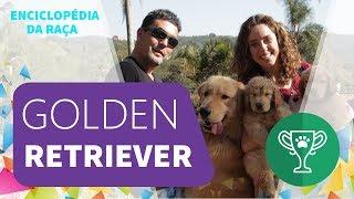 Enciclopédia da Raça: Golden Retriever