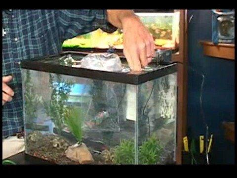 How to choose & buy aquarium fish.?