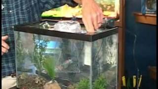 Choosing A Fish Tank : Adding Fish To A Fish Tank