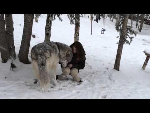 這位正妹飼養員正在安慰悶悶不樂的灰狼,接下來雪景中上演的「美女與野獸」場景比電影更浪漫!