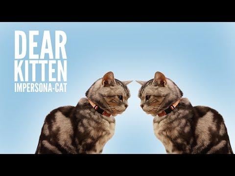 Napodobo-kočky