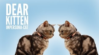 Dear Kitten: Impersona-cat