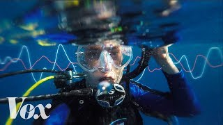 What the world sounds like underwater. Subscribe to our channel! http://goo.gl/0bsAjO We often think of the ocean as a quiet, ...