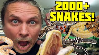 FEEDING 2000 SNAKES IN ONE DAY!! | BRIAN BARCZYK by Brian Barczyk