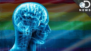 Video What Does The Transgender Brain Look Like? MP3, 3GP, MP4, WEBM, AVI, FLV Maret 2019