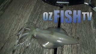 Corinella Australia  city photo : Oz Fish TV Season 2 Episode 4 - Landbased Squid Hop