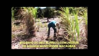 Cultura macaubense; produção artesanal de garapa, melado e rapadura