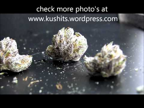 master kush, hash oil, amber glass, orange county 1080p
