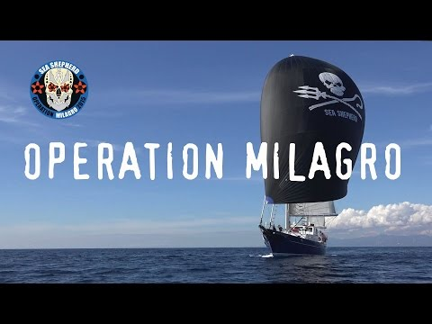 Operation Milagro II Vaquita Defense Campaign