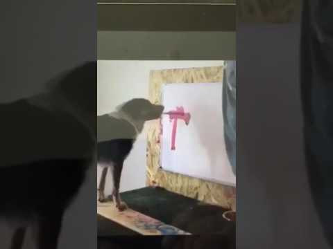 Dog paints trump name then pee's on it lol