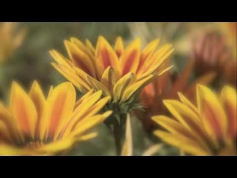 Tekst piosenki Wynonna Judd - Flies On The Butter (You Can't Go Home Again) po polsku