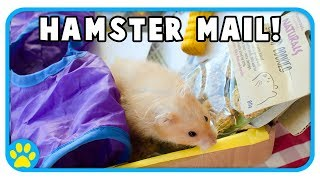 Hamster & Mouse Toys & Healthy Treats Unboxing! by ErinsAnimals