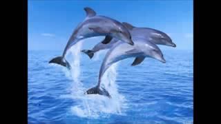 Si Lumba Lumba Lagu Anak Populer