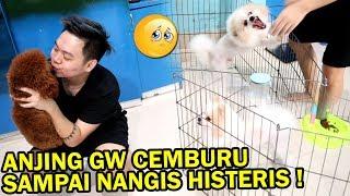 Video GW PRANK GAK SAYANG SAMA ANJING GW OLAF! *gw digigit* MP3, 3GP, MP4, WEBM, AVI, FLV Juni 2019