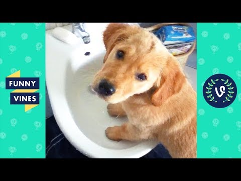 TRY NOT TO LAUGH - Cute FUNNY ANIMALS  Funny Videos February 2019