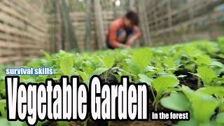 Video Survival Skills: Grow a Vegetable Garden in the forest, The Best Food to survival MP3, 3GP, MP4, WEBM, AVI, FLV November 2018