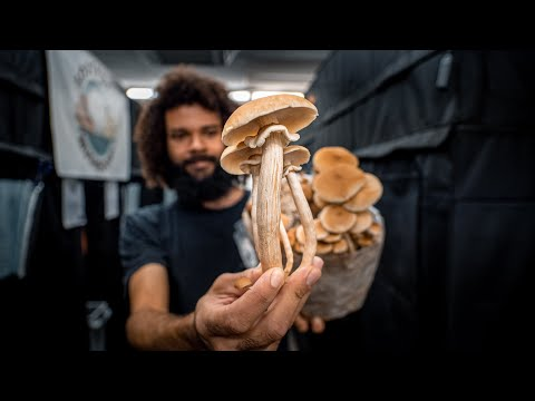 The Journey from Mycelium to Mushrooms on an Urban Mushroom Farm | Southwest Mushrooms