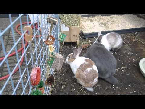 De konijnen krijgen een eetbare slinger voor dierendag