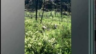 Understanding Landscape 13: Disturbance Ecology