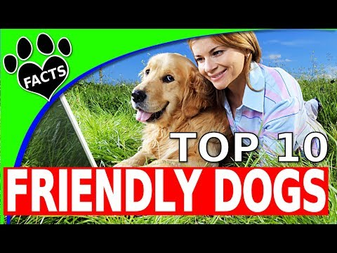 TopTenz: Top 10 Friendliest Dog Breeds 10 Family Friendly Dogs 101 - Animal Facts (видео)