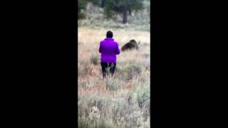 Video CLOSE CALL - How to get attacked by a Grizzly Bear - Yellowstone MP3, 3GP, MP4, WEBM, AVI, FLV September 2017