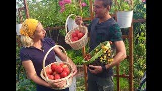 Огород декабрева и рыкалиной