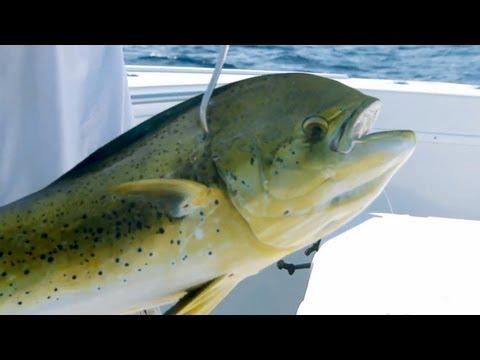 "Saltwater Experience: ""Dolphin Fishing with Scott Walker"" Season 7/Episode 6"