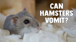 Can Hamsters Vomit?    What To Do If Your Hamster Throws Up 🐹 by ErinsAnimals