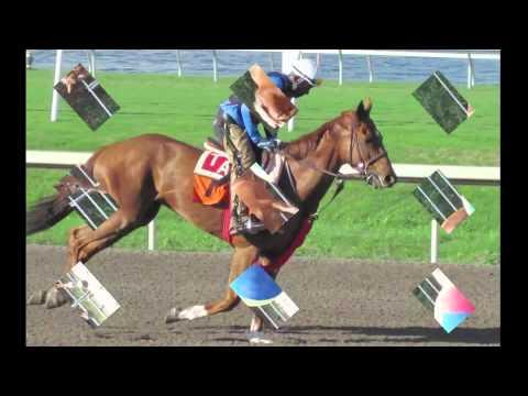 Hidden Acres Equestrian Center-Cocoa,FL