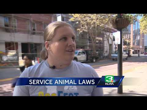 Fake Out: How California cracks down on fake service animals