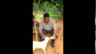 Dr Jeff Helps feed a disabled goat kid in a Kenyan village.