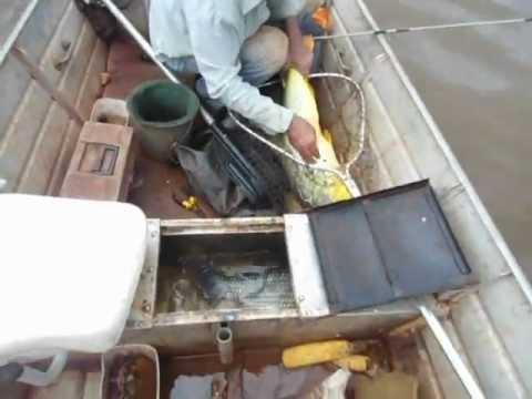 Pescaria de Dourado Japura