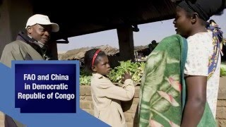 FAO and China new South-South Cooperation Program in Democratic Republic of Congo