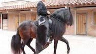 Tourist Riding Colombian Paso Fino Horses- TvAgro por Juan Gonzalo Angel