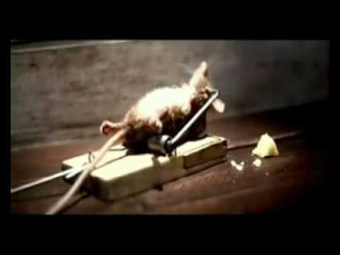 0 Video comercial gracioso del ratoncito y el queso