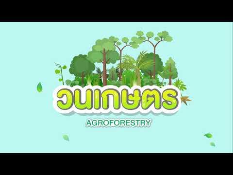 วนเกษตร (Agroforestry)