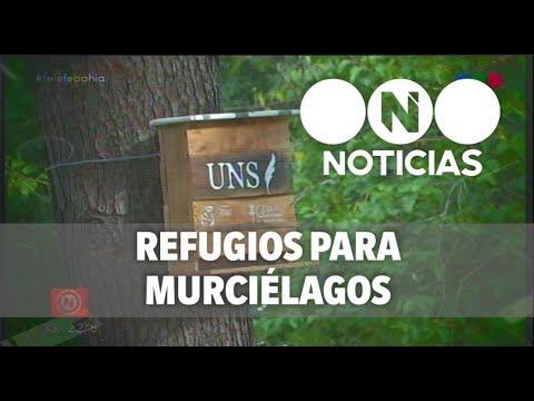 Instalan refugios para murciélagos en varios sectores