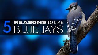 Video 5 Good Reasons To Like Blue Jays MP3, 3GP, MP4, WEBM, AVI, FLV Agustus 2018