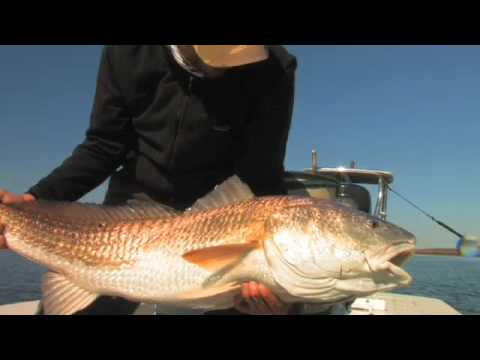 Louisiana Redfish 2008 Fly Fishing Redfish