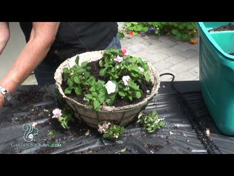 How to Make a Hanging Basket of Impatients (Advanced)