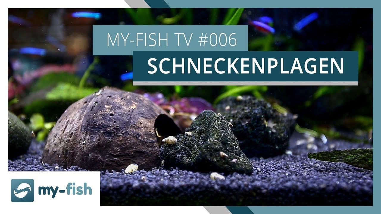 my-fish TV - Deine Nr. 1 Anlaufstelle für alle Themen rund um die Aquaristik 58