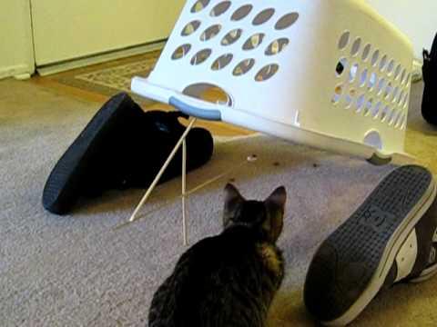 「[ネコ]古典的な罠に思惑通りにかかってしまったニャンコ。」のイメージ