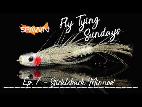 Episode 7: Stickleback Minnow for Predatory Fish