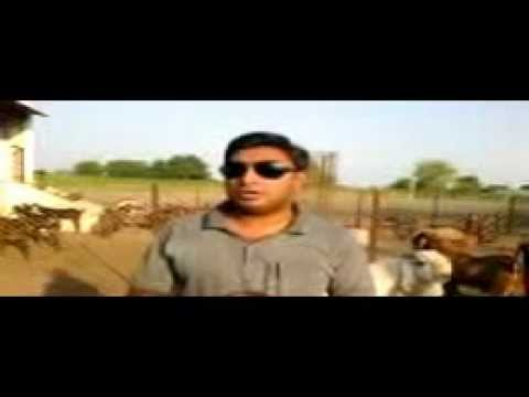 rajasthan goat farming - Akbar Khan Qureshi owner Qureshi Farm www.qureshifarm.com was the finalist in Faces of Transformation 2011 - 2012 competition by Nations United and represent...