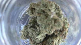 Atomik Moon Rocks @ HighTImes Cannabis Cup by Urban Grower