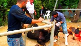 Nebevi Hareket Derneği'nin Yalova'daki Kurban Satış ve Kesim Organizesi 2014